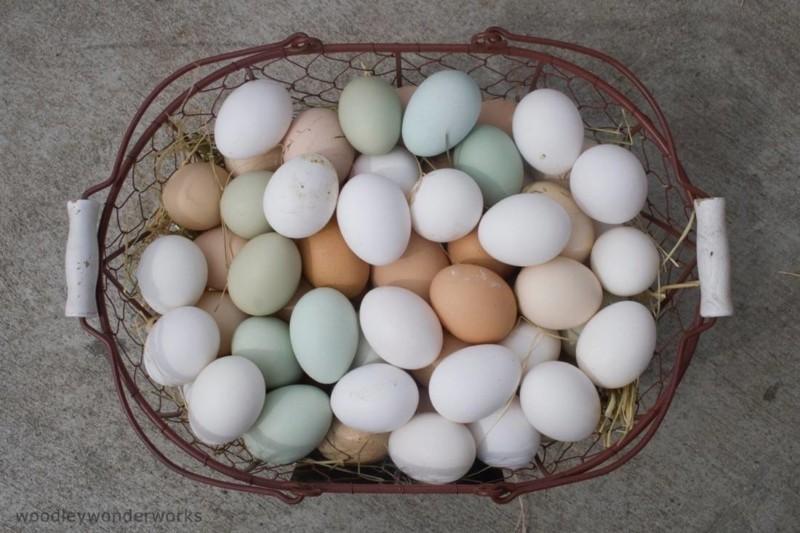 Eier haltbar machen und Eier richtig lagern