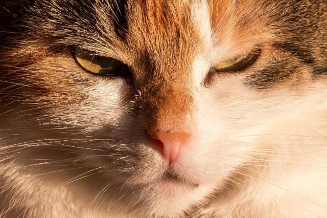 Tipps zu Anschaffung von Katze oder Kater
