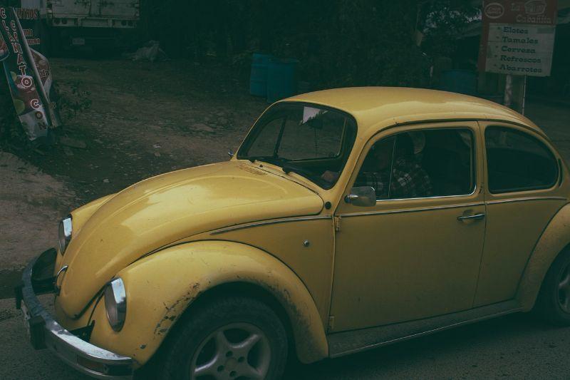 Marder vertreiben und effektiv vom Auto fernhalten