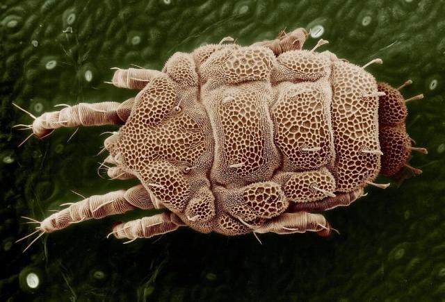Hausstaubmilben & Milben bekämpfen