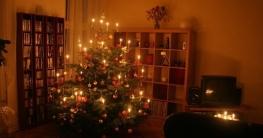 Den besten Weihnachtsbaum kaufen und finden