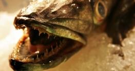 Frischer Fisch erkennen & Fisch haltbar machen