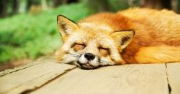 Hausmittel zum Einschlafen & besser Schlafen