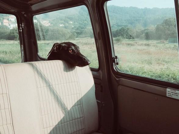 Mit Hund im Auto sicher fahren