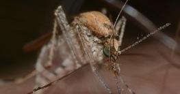 Hausmittel gegen Mückenstiche & Insektenstiche
