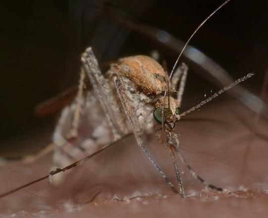 Hausmittel Gegen Muckenstiche Insektenstiche