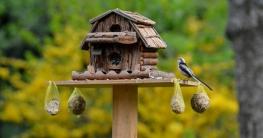 Tipps Vögel füttern, Vogelfütterung & Brutkasten