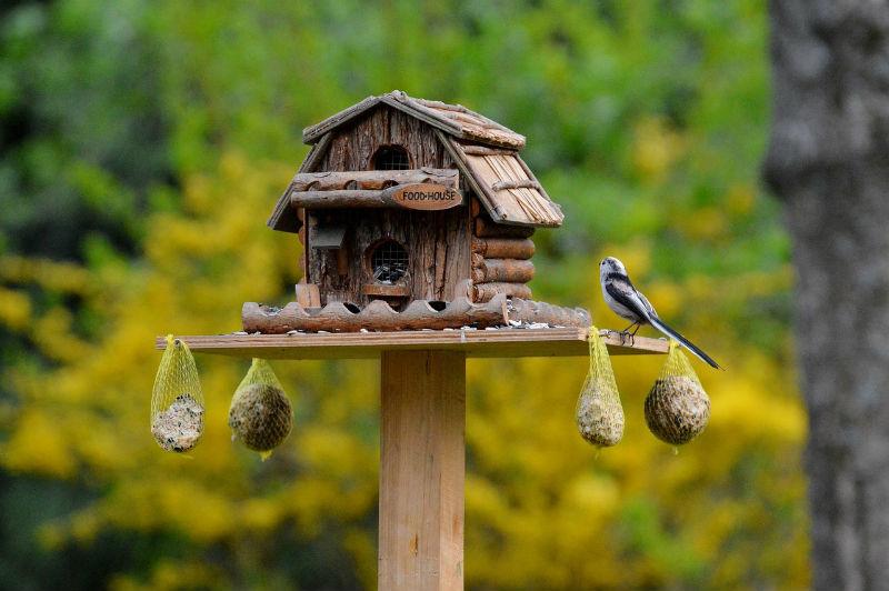 Tipps Zu Vogel Futtern Und Zu Vogelfutterung