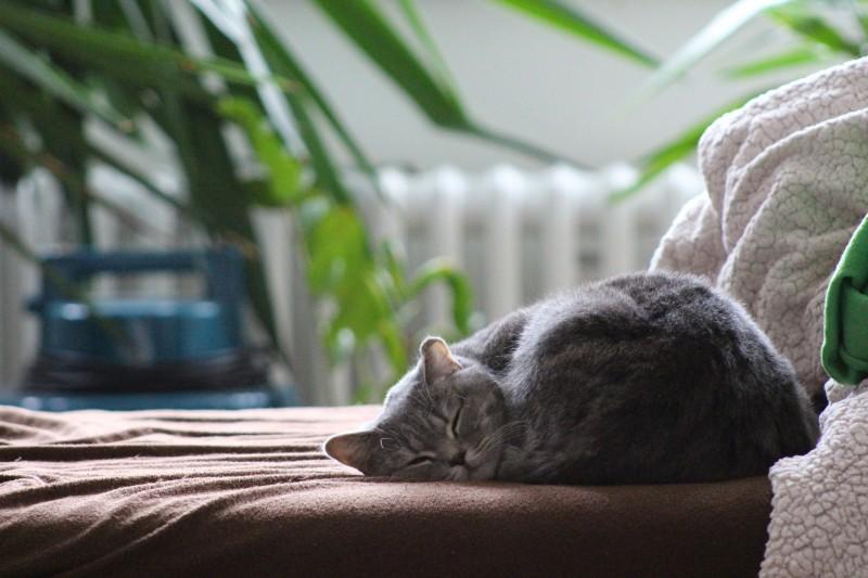 Mit Hausmitteln gegen Katzenurin Geruch entfernen