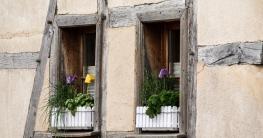 Kräuter auf der Fensterbank