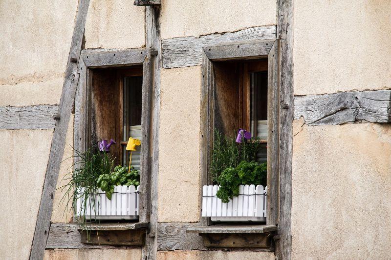Pflanzentipps Zur Pflanzenpflege Tipps Pflanzenpflege Hausmittel