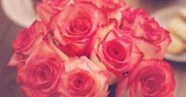 Rosen Tipps für Rosenliebhaber