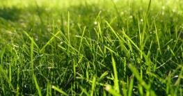 Tipps für Rasenpflege & Rasendünger