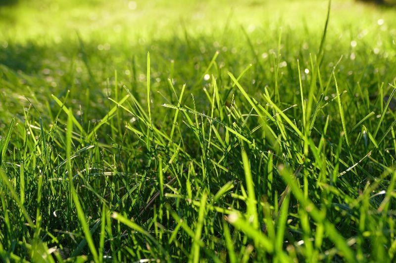 Tipps für Rasenpflege und Rasendünger