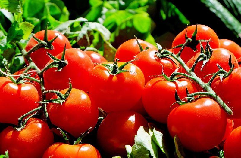Tomaten pflanzen, trocknen und richtig lagern