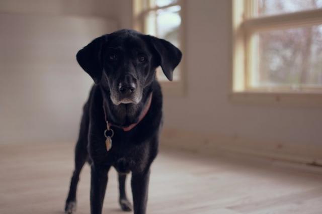 Hundefutter selber machen mit Rezepte