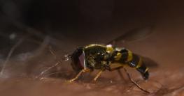 Mittel zum Wespenstich & Bienenstich behandeln