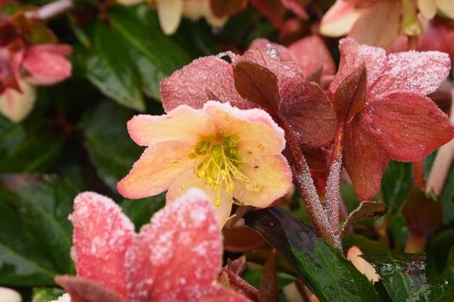 Winterharte exotische Pflanzen