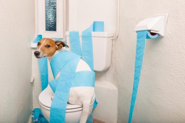 Hausmittel Hunde Durchfall Erbrechen