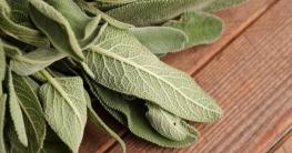 Salbei als Hausmittel und Heilpflanze