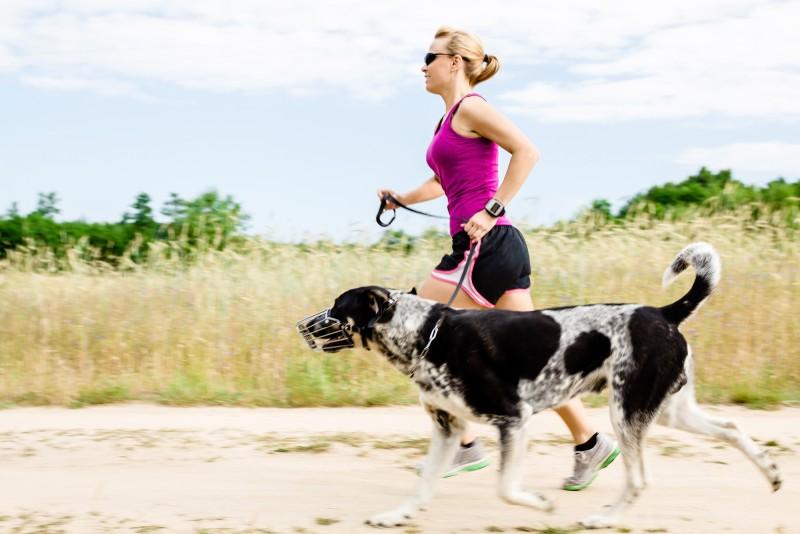 Hundefitness für mehr Wohlbefinden bei Hunden