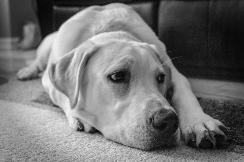 Hundekot oder Katzenkot vom Teppich entfernen